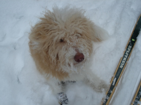 Gwynn in Snow 2011